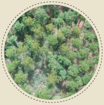 mapa de imagens aéreas