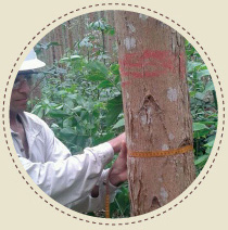 foto do inventario florestal